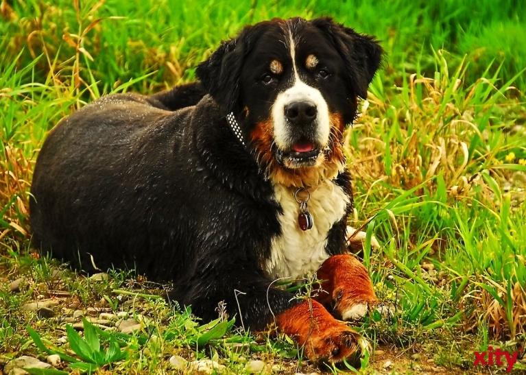 Herrchen sollten aufpassen, was ihre Hunde fressen (xity-Foto: S. Holtschneider)