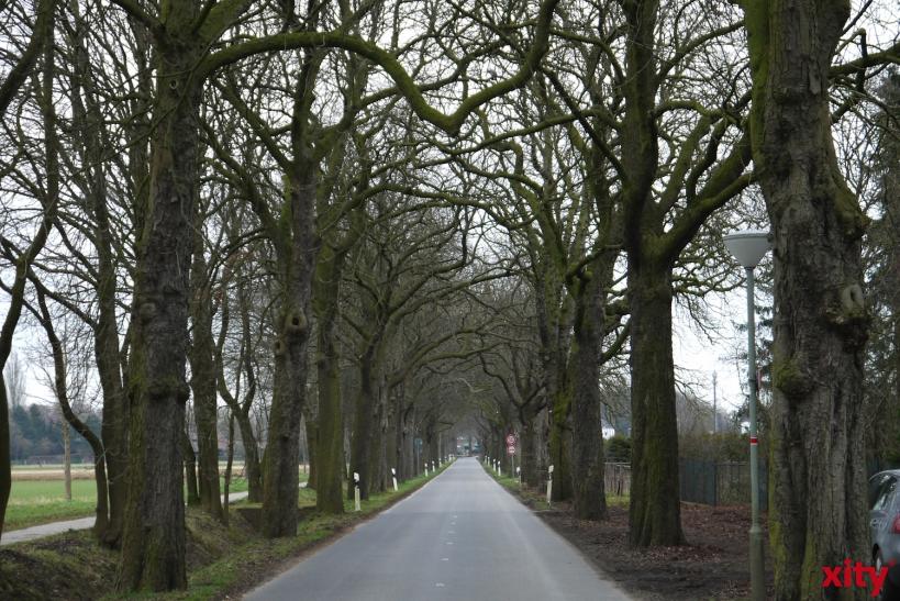 Über 400 Bäume müssen in Krefeld gefällt werden (xity-Foto: E. Aslanidou)
