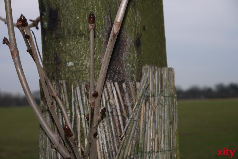 Um schlimmere Schäden zu vermeiden wurden mittels Hubschraubereinsatzes alle Kastanienbäume kontrolliert (xity-Foto: E. Aslanidou)