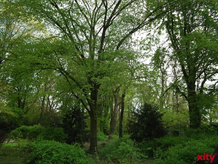 Leichte Erholung für Krefelds Wälder (xity-Foto L. Drees)
