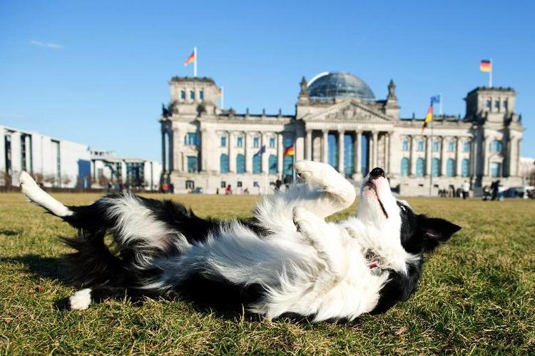 Berliner Bettensteuer gilt auch für Hunde von Touristen (© 2014 AFP)