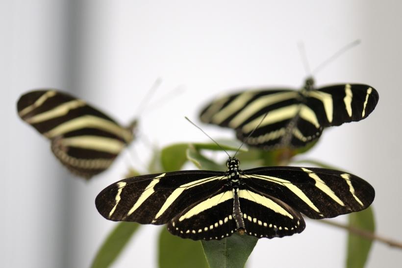 Schmetterlingsfreunde und Filmfans können im Zoo Krefeld in den Schmetterlings-Dschungel eintauchen (Foto: Zoo Krefeld)