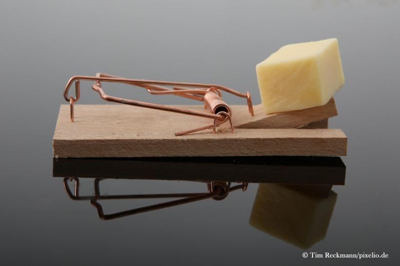 Sekunden, die entscheidend sind: Wer behält die Oberhand? Das gesunde Misstrauen oder der Appetit? Obsiegt letzterer, kostet es die Maus wenigstens nicht den Kopf. Hier handelt es sich um eine Lebendfalle. Foto: Siegbert Werner