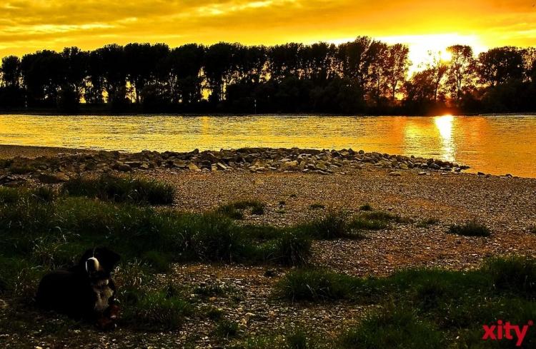 Vogelkundliche Führung durch den Himmelgeister Rheinbogen (xity-Foto: S. Holtschneider)