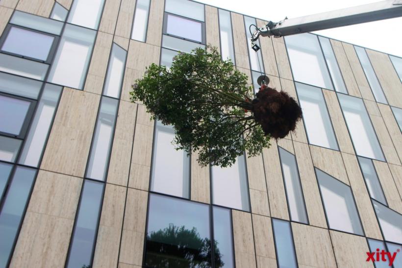 Mit einem Kran werden die Bäume in luftige Höhe gebracht (xity-Foto: P. Basarir)
