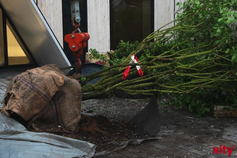 Auch im Winter wird den Bäumen danke einer Heizplatte nicht kalt (xity-Foto: P. Basarir)