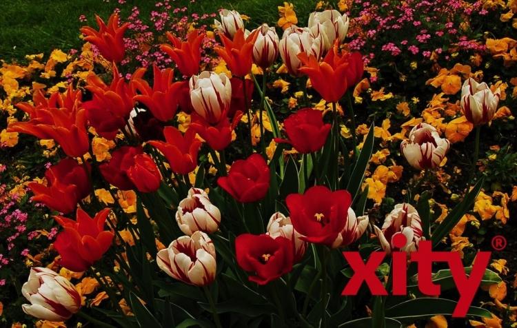 Führung durch den Floragarten Düsseldorf (xity-Foto: S. Holtschneider)