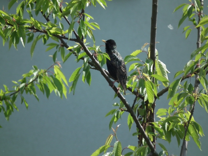Kennenlernen der heimischen Vogelwelt im Kalkumer Schlosspark (xity-Foto: D. Postert)