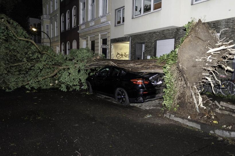 Auf der Gartenstraße stürzten fast alle Bäume (bis 10m hoch!) der Länge nach quer über die Straße und beschädigten mehrere Autos, teilweise Totalschäden.