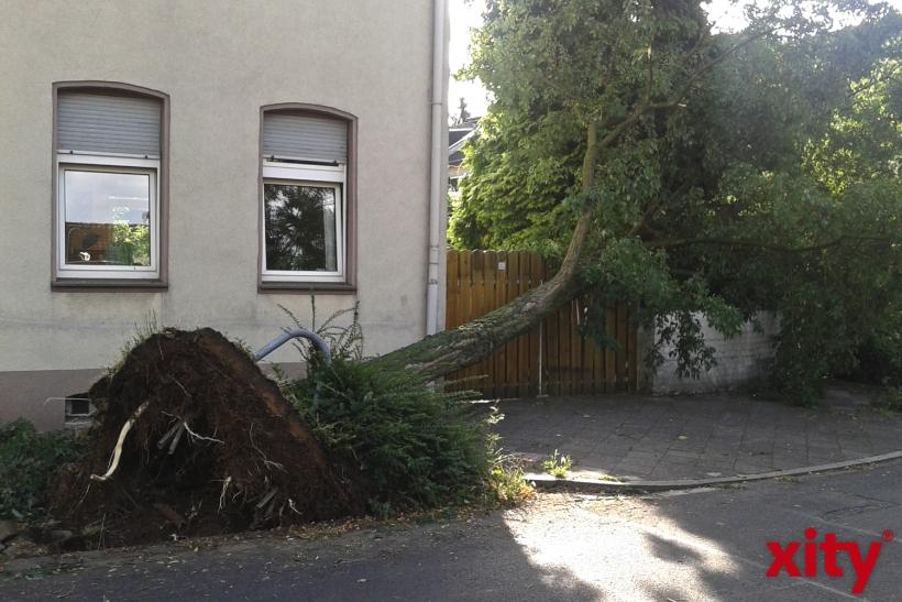Teilweise wurden ganze Bäume entwurzelt (xity-Foto: P. Basarir)
