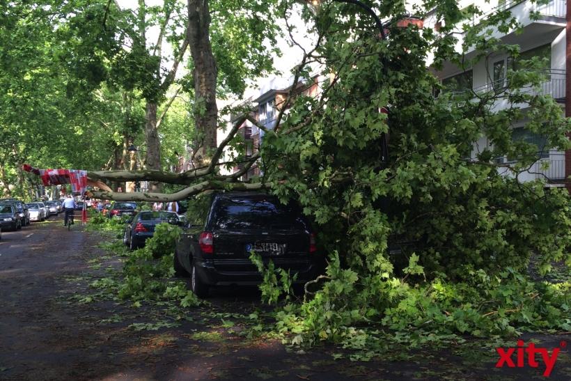 Menschen wurden verletzt, weil Bäume auf die Personenwagen gestürzt waren (xity-Foto: P.I.)