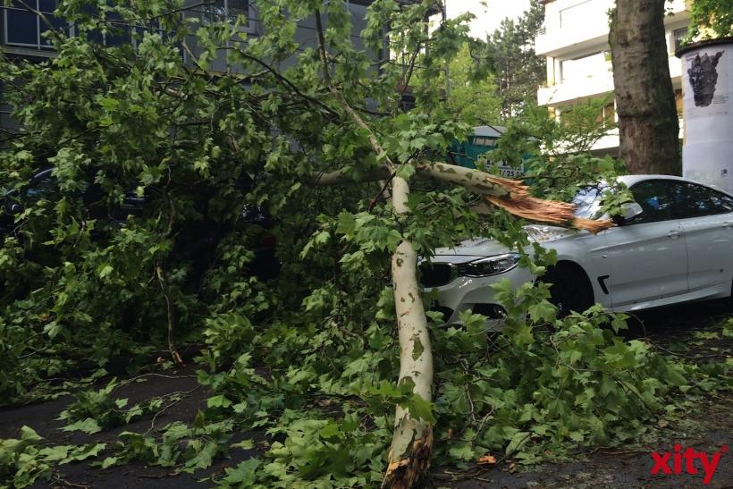 Fahrzeuge wurden von Ästen getroffen (xity-Foto: P.I.)