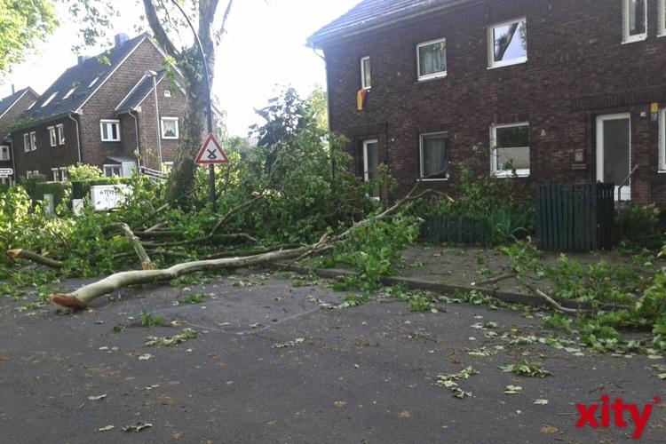 Rund 25 Prozent der Bäume in der Landeshauptstadt sind dem Sturm zum Opfer gefallen (xity-Foto: P. Basarir)