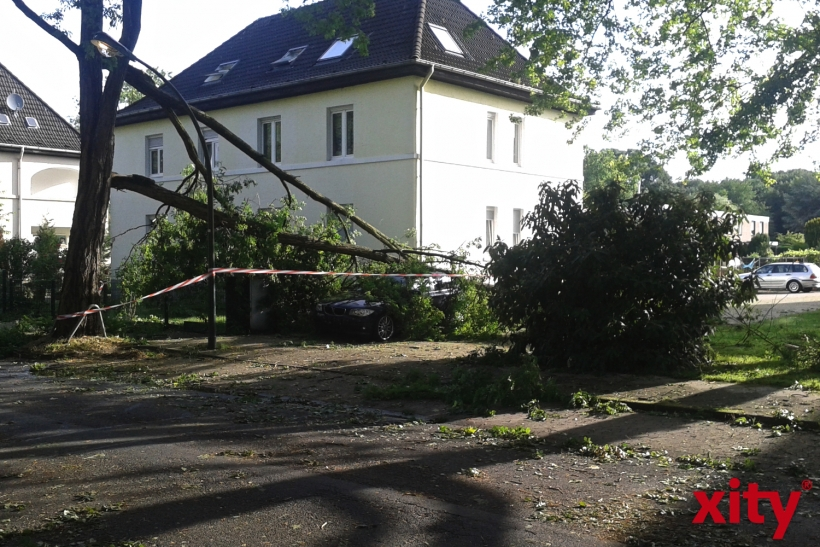 Insgesamt müssen mehr als 120 umgestürzte Bäume beseitigt werden. (xity-Foto: P. Basarir)