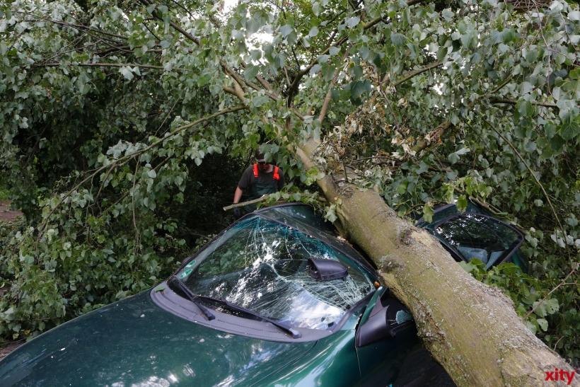 Große Bäume müssten von Autos entfernt werden (xity-Foto: D. Creutz)