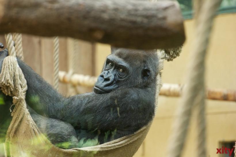 Japanische Gemeinschaft Düsseldorf zu Besuch im Zoo Krefeld (xity-Foto: D. Creutz)