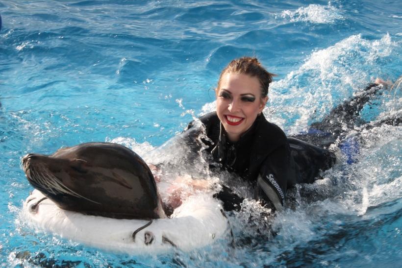 Seelöwenfans haben bei Circus Krone die Möglichkeit ihren Lieblingen ganz nahe zu sein. (xity-Foto: E. Aslanidou)