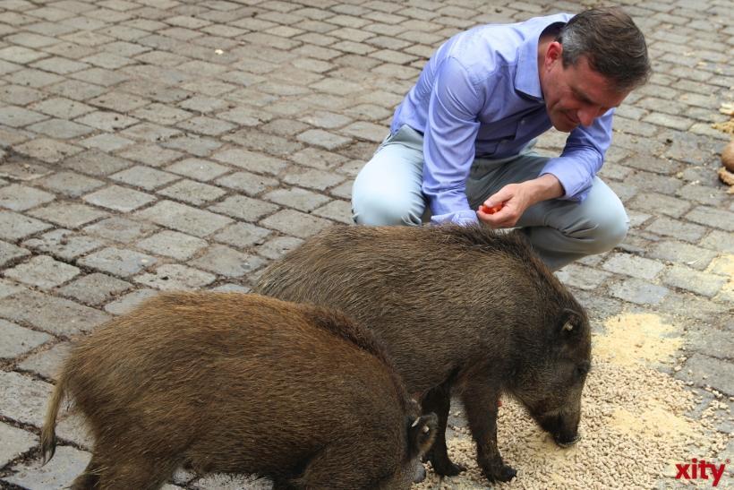 Thomas Geisel füttert die Wildschweine (xity-Foto: H.Müller)