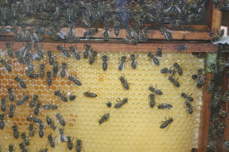 Die Feldlerche und der Kiebitz sind ebenso wie der Feldhase nur noch selten anzutreffen und auch Insekten wie Schmetterlinge und Bienen finden immer weniger Lebensraum. (xity-Foto: P. I. )