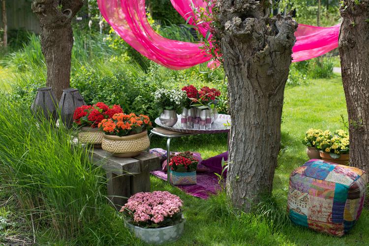 Die Kalanchoë verbreitet orientalisches Flair im heimischen Garten (Foto: Blumenbüro)