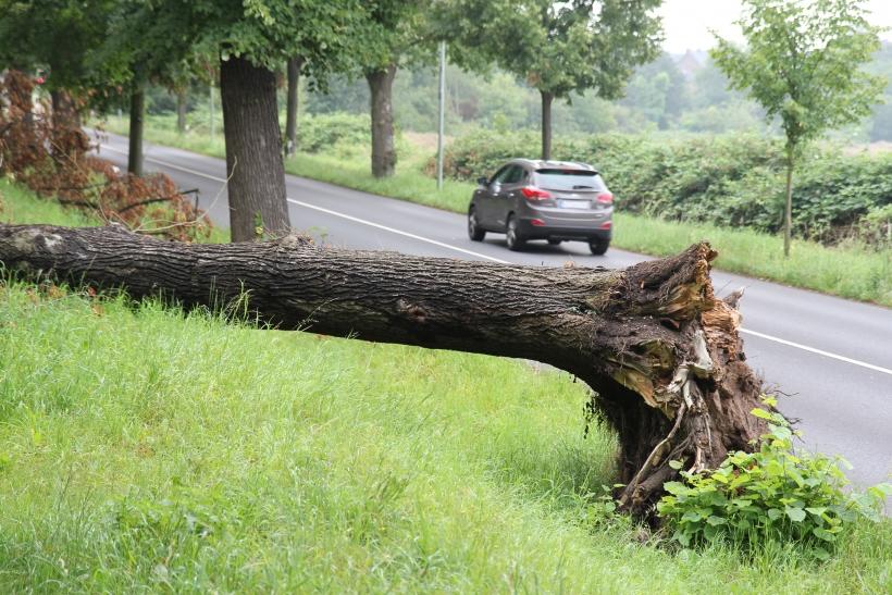 """Schätzungsweise 120 Bäume an den Kreisstraßen wurden beim Orkan """"Ela"""" entwurzelt, sind abgeknickt oder mussten gefällt werden. Diese Bilanz zog jetzt das Tiefbauamt. (Foto: Rhein-Kreis Neuss)"""