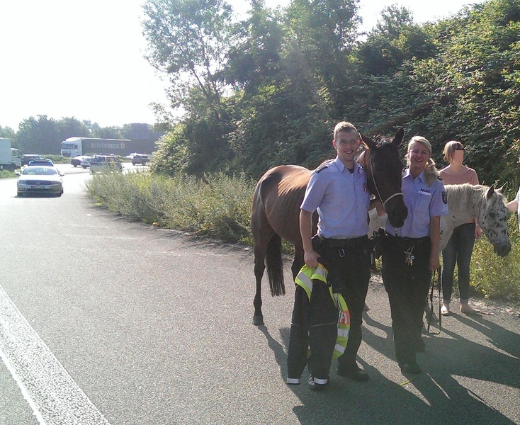 """Zwei Pferde auf der Autobahn """"ausgebüxt"""" (Foto: Polizei Düsseldorf)"""