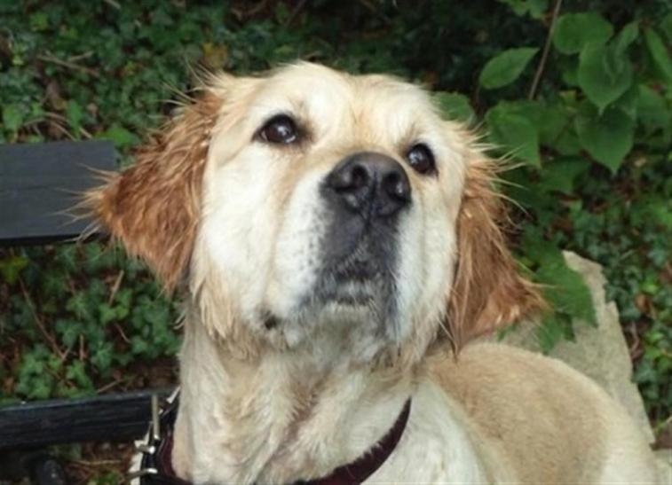 OSD-Mitarbeiter retten hilflosen Hundewelpen (xity-Foto: P.I.)