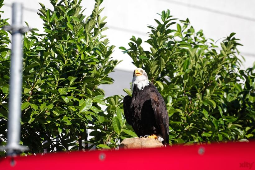 Adler zum beobachten aus Hellental (xity-Foto: D. Creutz)