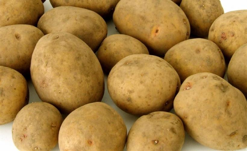 Die nordrhein-westfälischen Landwirte erzielten bei der diesjährigen Kartoffelernte den zweithöchsten Flächenertrag aller Zeiten (xity-Foto: D. Postert)