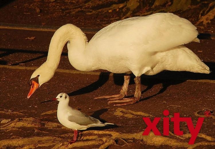 Spaziergang durch den Zoopark Düsseldorf (xity-Foto: S. Holtschneider)