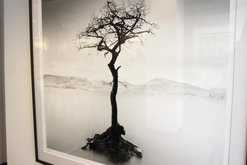 Milarrochy Tree (xity-Foto: P.Basarir)