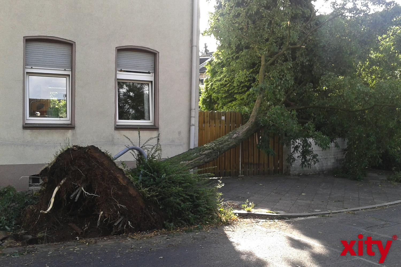 Sturmschäden Düsseldorf Juni 2014 (Foto: xity)