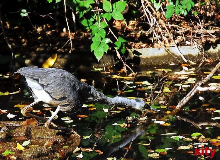 Der Umwelt-Club für Kinder und Jugendliche erforscht die Vogelwelt im VHS-Biogarten im Südpark (xity-Foto: S. Ho