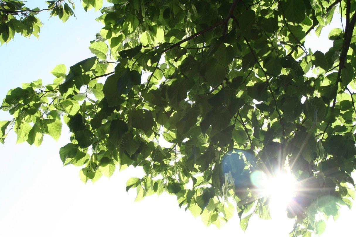 Sonnige Tage erfreuen die Menschen (xity-Foto:M.Völker)