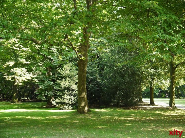 Zwölf XXL-Bäume für den Rheinpark Golzheim (xity-Foto: M. Völker)
