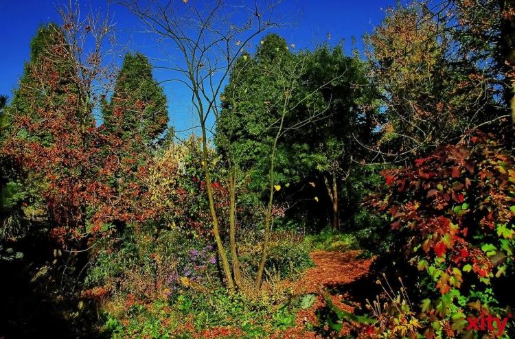 Der Beginn der Wiederaufforstung ist für den Herbst 2015 geplant (xity-Foto: S. Holtschneider)