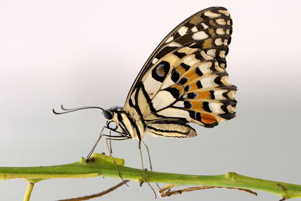 Pünktlich zum Beginn der Osterferien hat der Schmetterlings-Dschungel im Zoo Krefeld wieder seine Türen für die Besucher geöffnet (Foto: Zoo Krefeld)