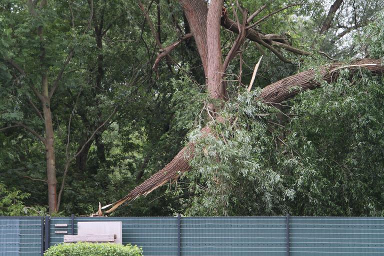 Mann bei Sturm auf Bundesgartenschau von Ast erschlagen (© 2015 AFP)