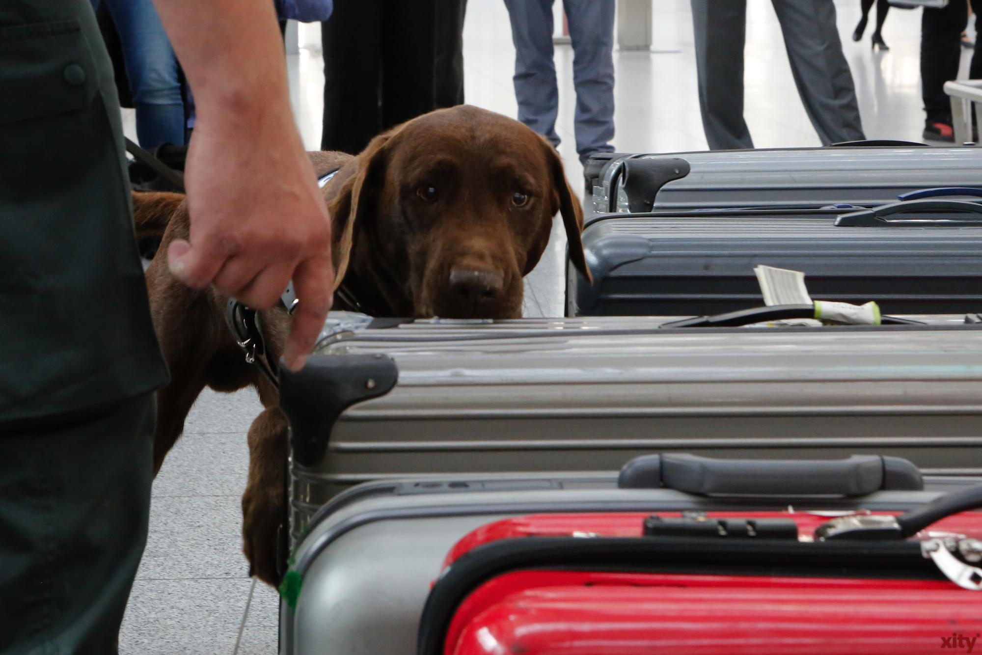 Uno ist spezialisiert auf tierische Gegenstände (Foto: xity)