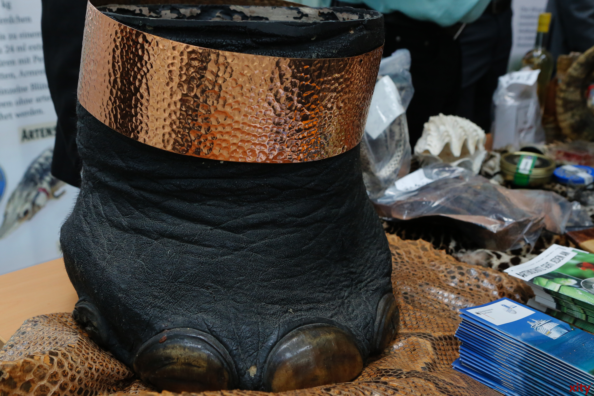 Dieser Elefantenfuß wurde ausgehölt und als Mülleimer Verwendet (Foto: xity)
