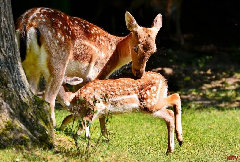 Der Wildpark Grafenberg öffnet am letzten Ferienwochenende seine Tore für ein großes Kinder- und Familienfest (Foto: xity)