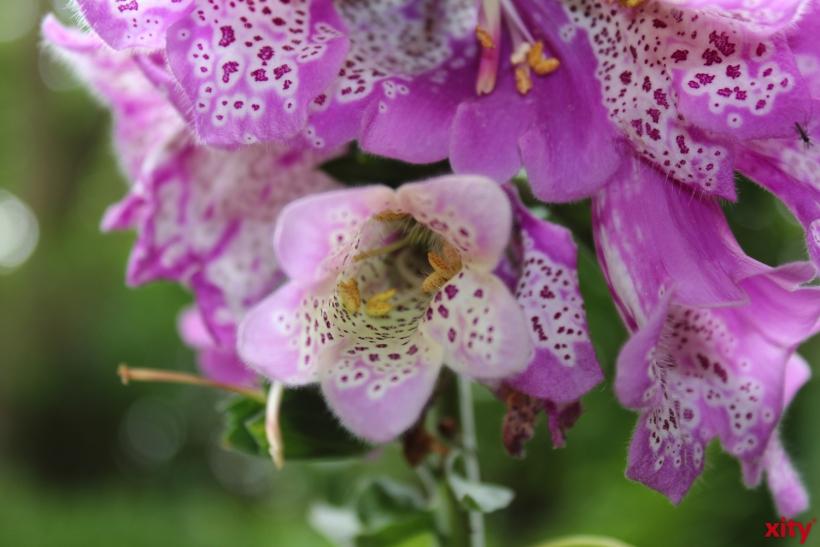 Wer nächstes Jahr anderen Gartenfreunden einen Einblick in seine grüne Oase geben möchte, kann sich bereits jetzt anmelden(Foto: xity)