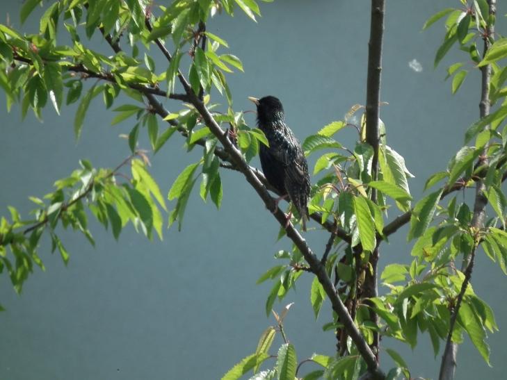 VHS-Biogarten bietet Kurse zu Falknerei und Vogelsafari (Foto: xity)