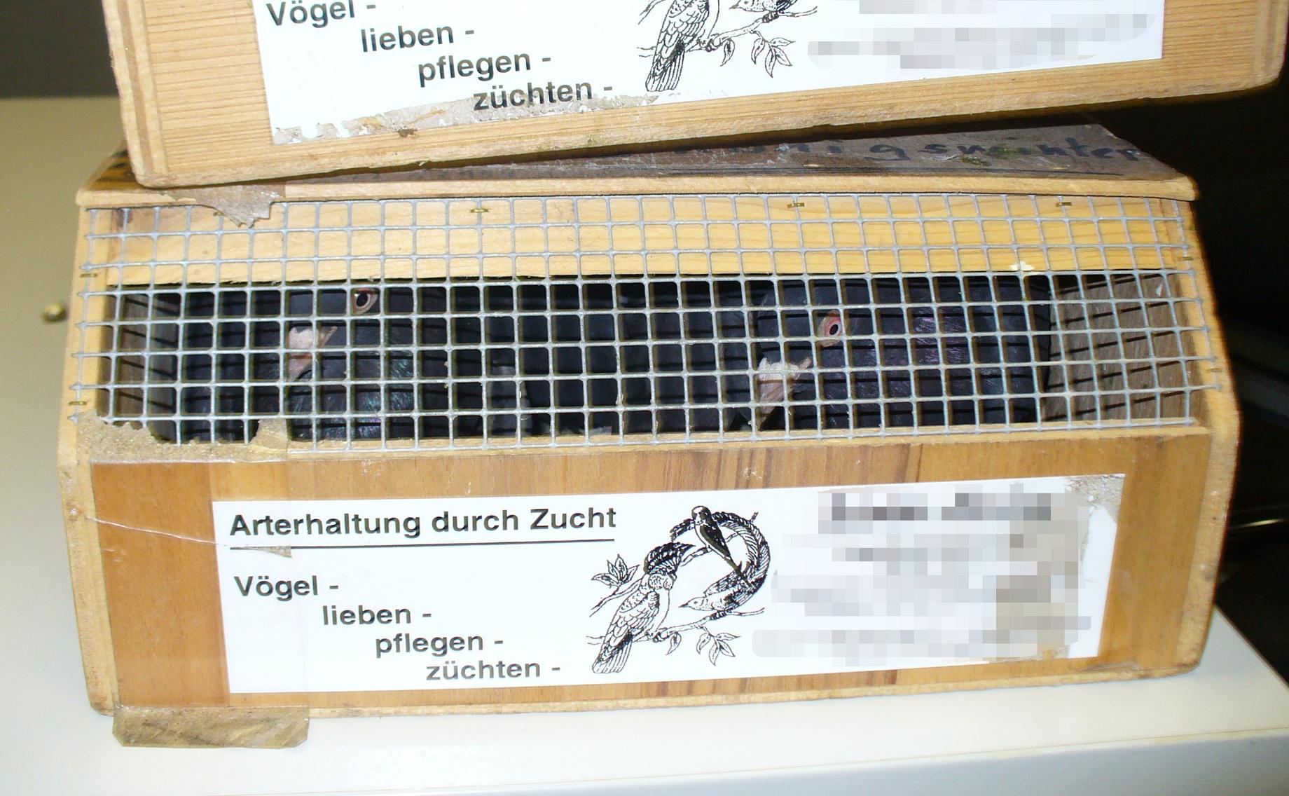Sieben Tauben wollte ein 37-jähriger Mann aus der Türkei nach Deutschland schmuggeln (Foto: Hauptzollamt Düsseldorf)