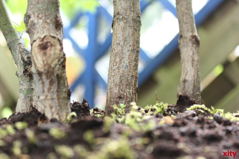 Esprit spendet für neue Bäume - Gartenamt-Azubis pflanzen sie ein (Foto: xity)