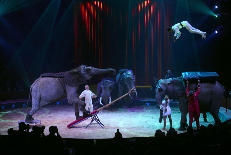 Wildtiere sollen aus dem Zirkus verbannt werden (© 2016 AFP)