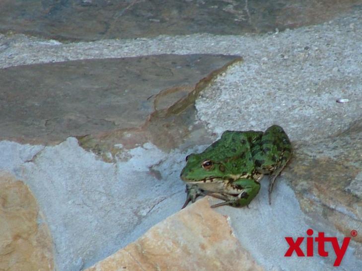 Der NABU macht zu Ostern darauf aufmerksam, dass jetzt die Krötenwanderung beginnt (Foto: xity)