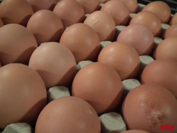 Hennen in NRW legten 2015 rund 1,31 Milliarden Eier(Foto: xity)
