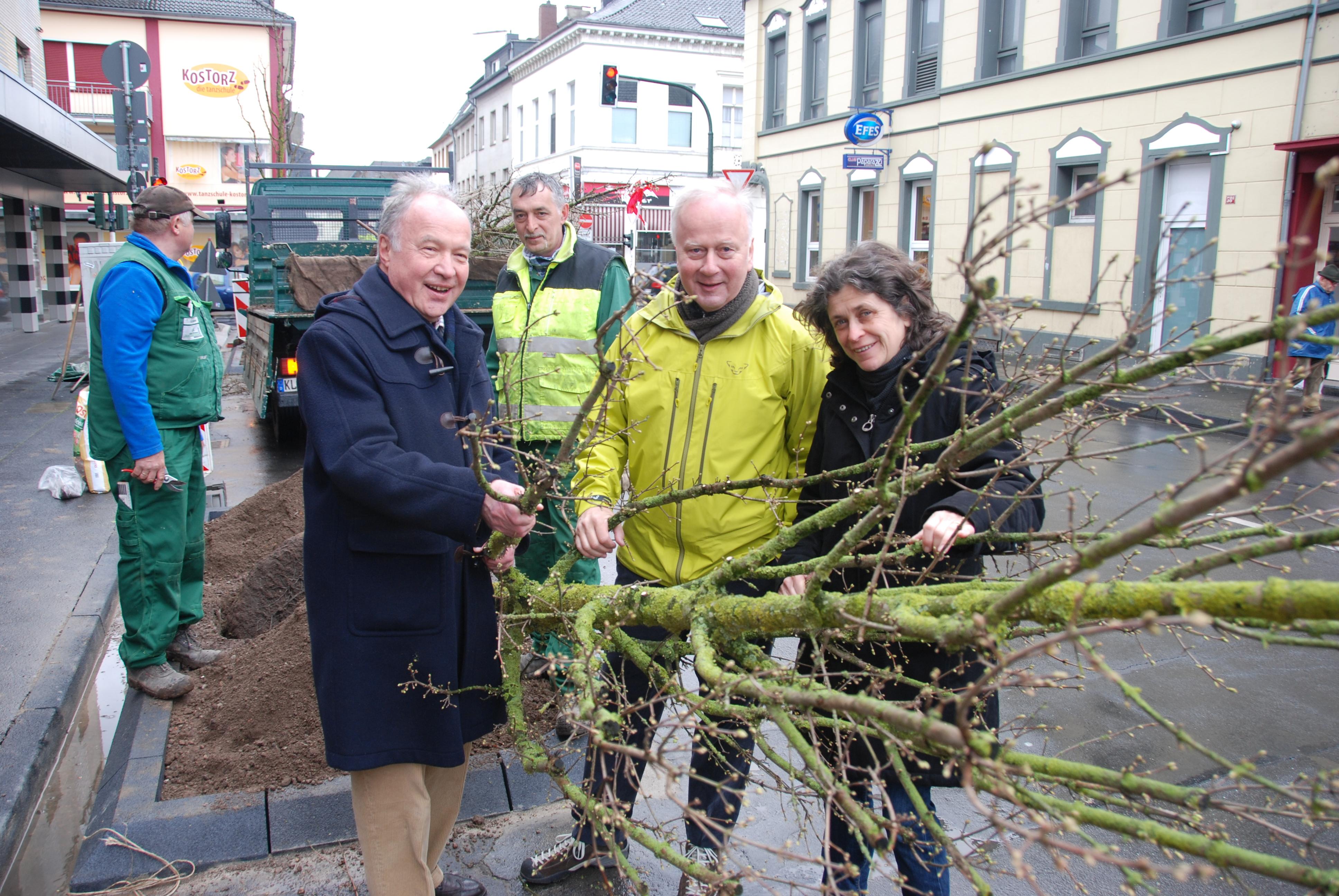 Drei neue Spitzahornbäume an der Marktstraße gepflanzt (Foto: Stadt Krefeld)