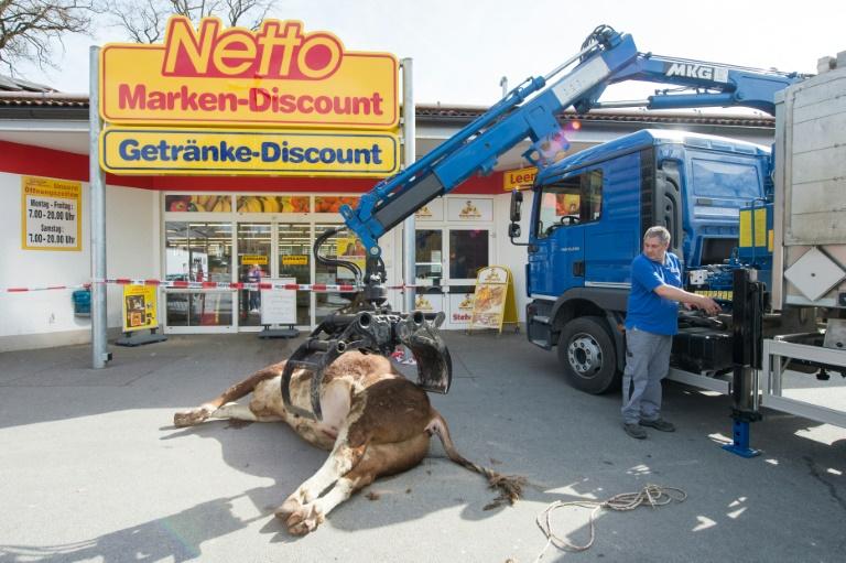 Bulle wird nach Flucht in bayerischem Supermarkt erschossen (© 2016 AFP)